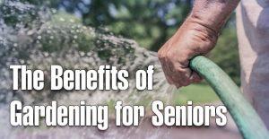 The Benefits of Gardening for Seniors