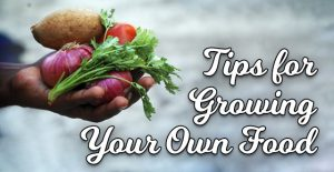 Tips for Growing Your Own Food